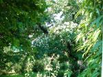 L\'été au jardin